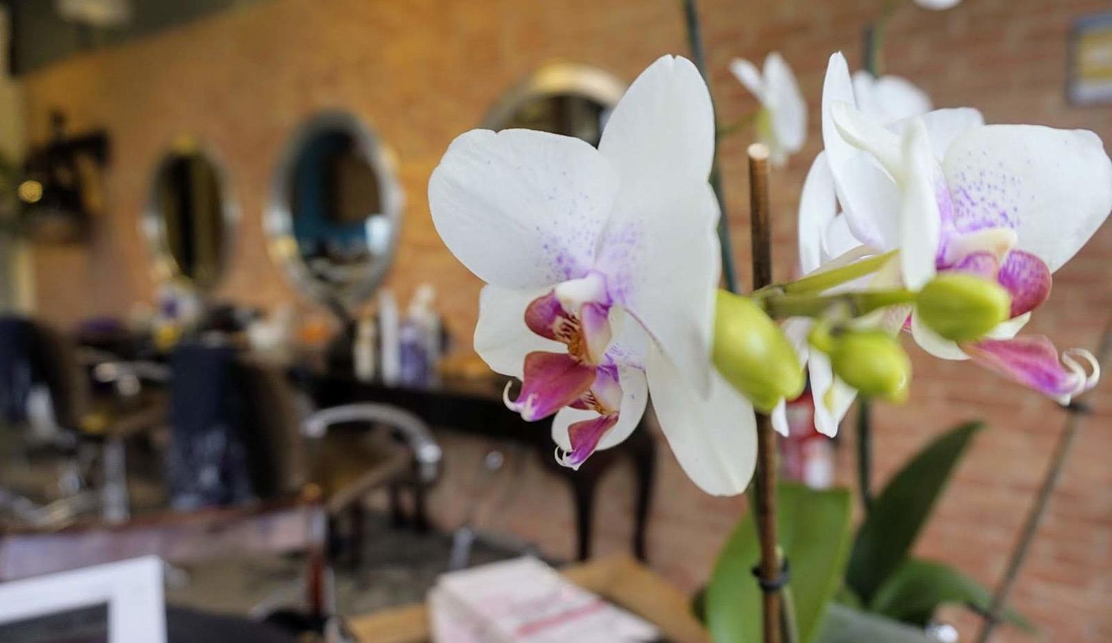 Orchidée salon coiffure afro à Paris Serris Marne la Vallée